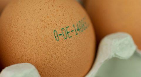 Hühnerei, Code, Bestimmung, Nachverfolgung, Ursprung