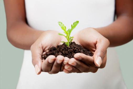 Reemtsma-Jugendschutz-junge-Pflanze-126156514